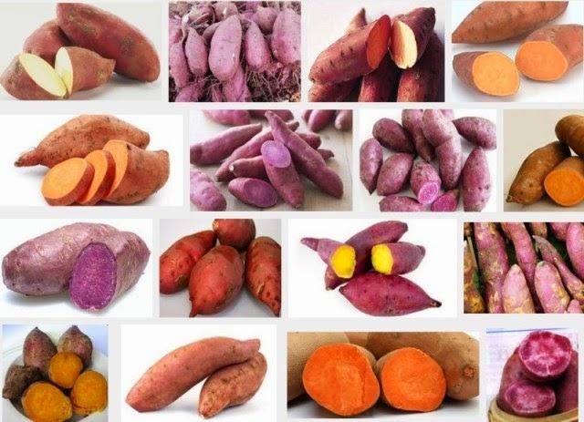 Semua jenis ubi kesukaan anak-anak