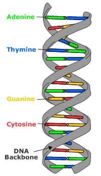 Protein yang digunakan oleh DNA