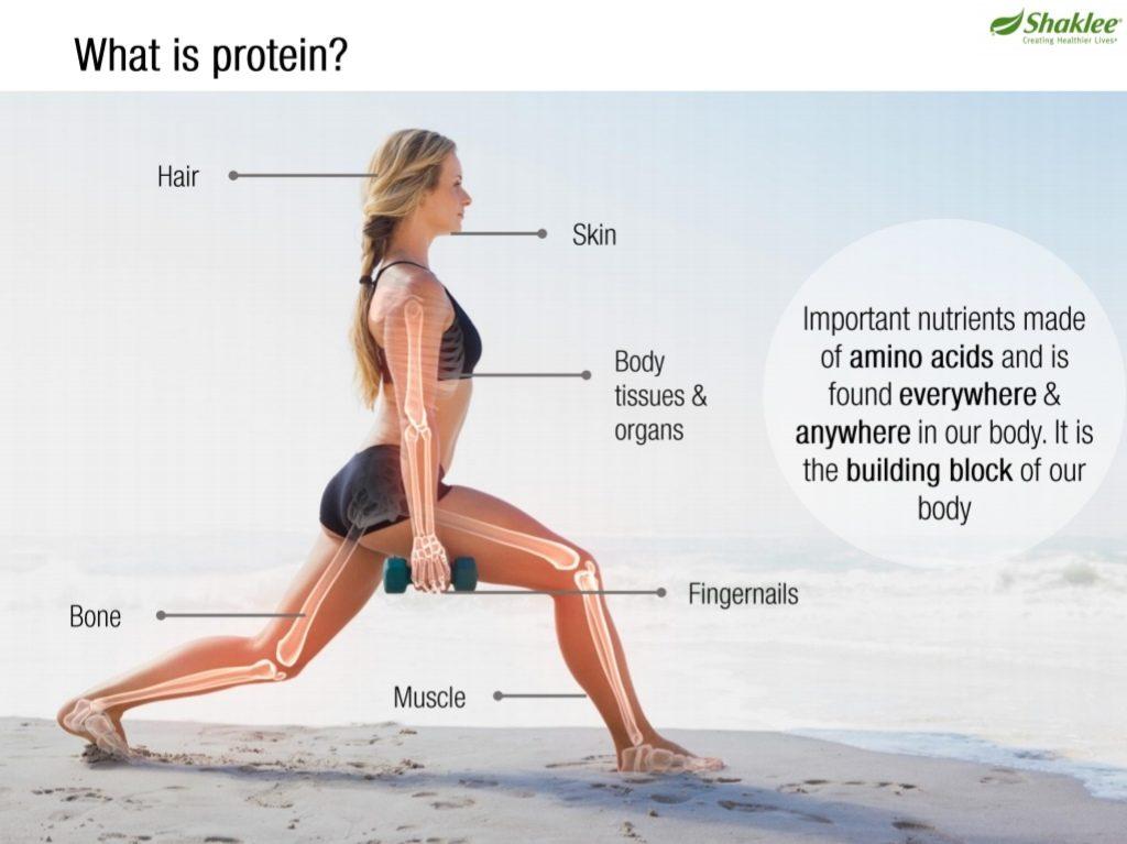 Apakah protein dan kepentingannya pada tubuh