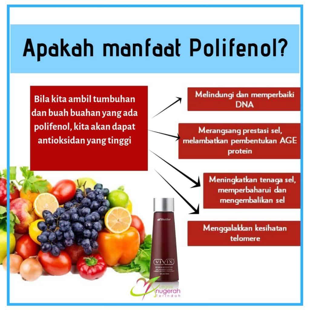 Polifenol dan resveratrol gabungan terbaik dengan 4 mekanisme penuaan