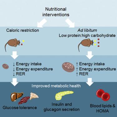 Diet keto tingkatkan penggunaan glukos