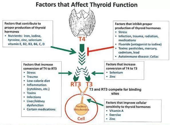 Faktor Yang Berkaitan Dengan Hormon Tiroid Yang Berkesan