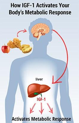 IGF1 aktifkan metabolic response