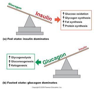 Glucagon ada hubungan dengan insulin