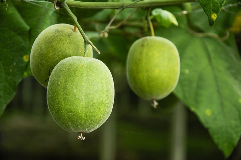 Monk fruit adalah gula daripada buah monk yang terbukti tidak menaikkan gula dalam badan