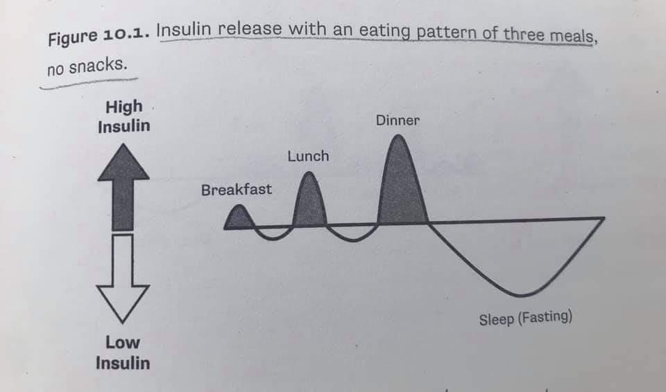 Kurang makan akan bantu rendahkan insulin, lebih mudah bakar lemak, lebih mudah kuruskan badan