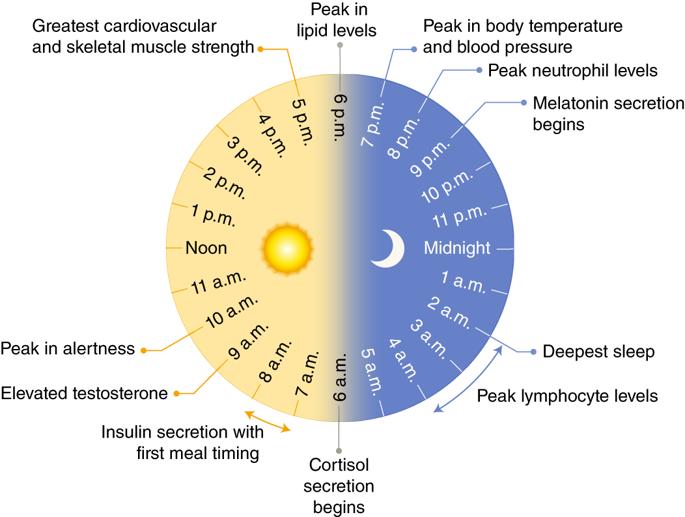 Badan kita ada jam dia, fungsi untuk healing
