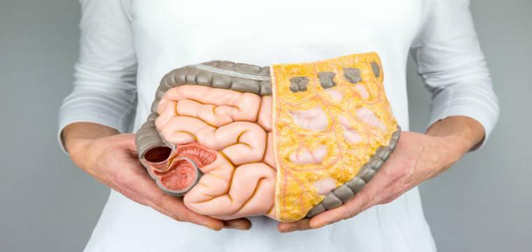 sel lemak simpan toksin