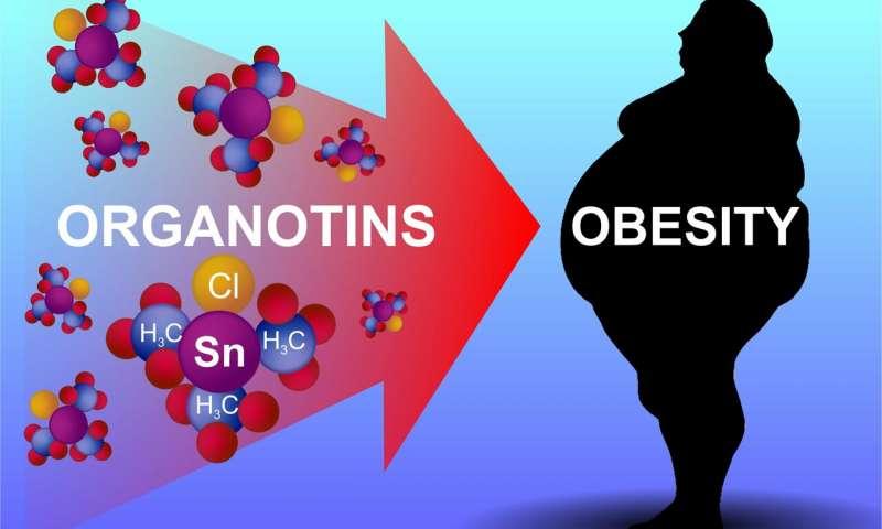 Organotins salah satu sebab punca obesiti