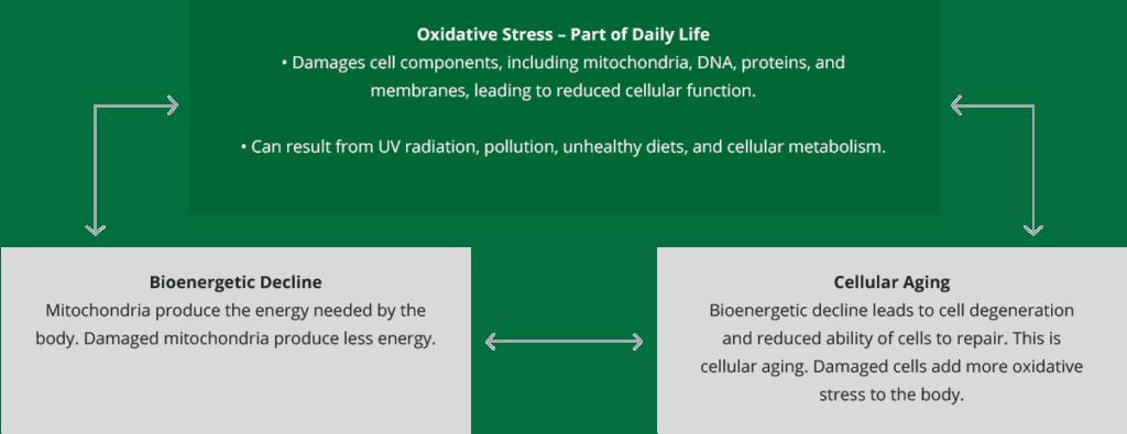 Ramuan dalam Vivix dan Res-V dapat membantu melambatkan penuaan di peringkat selular