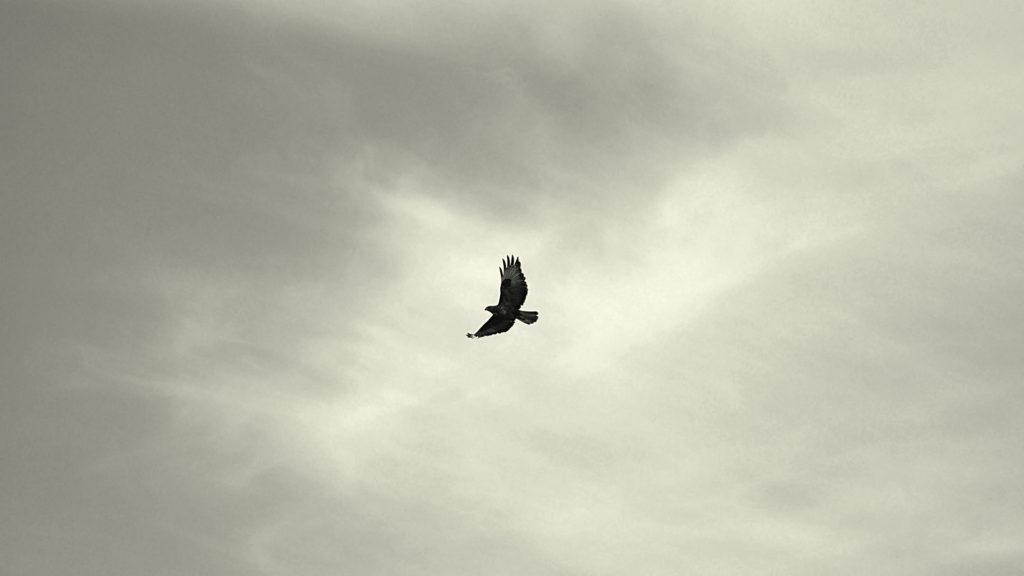 tawakal umpama burung terbang pagi