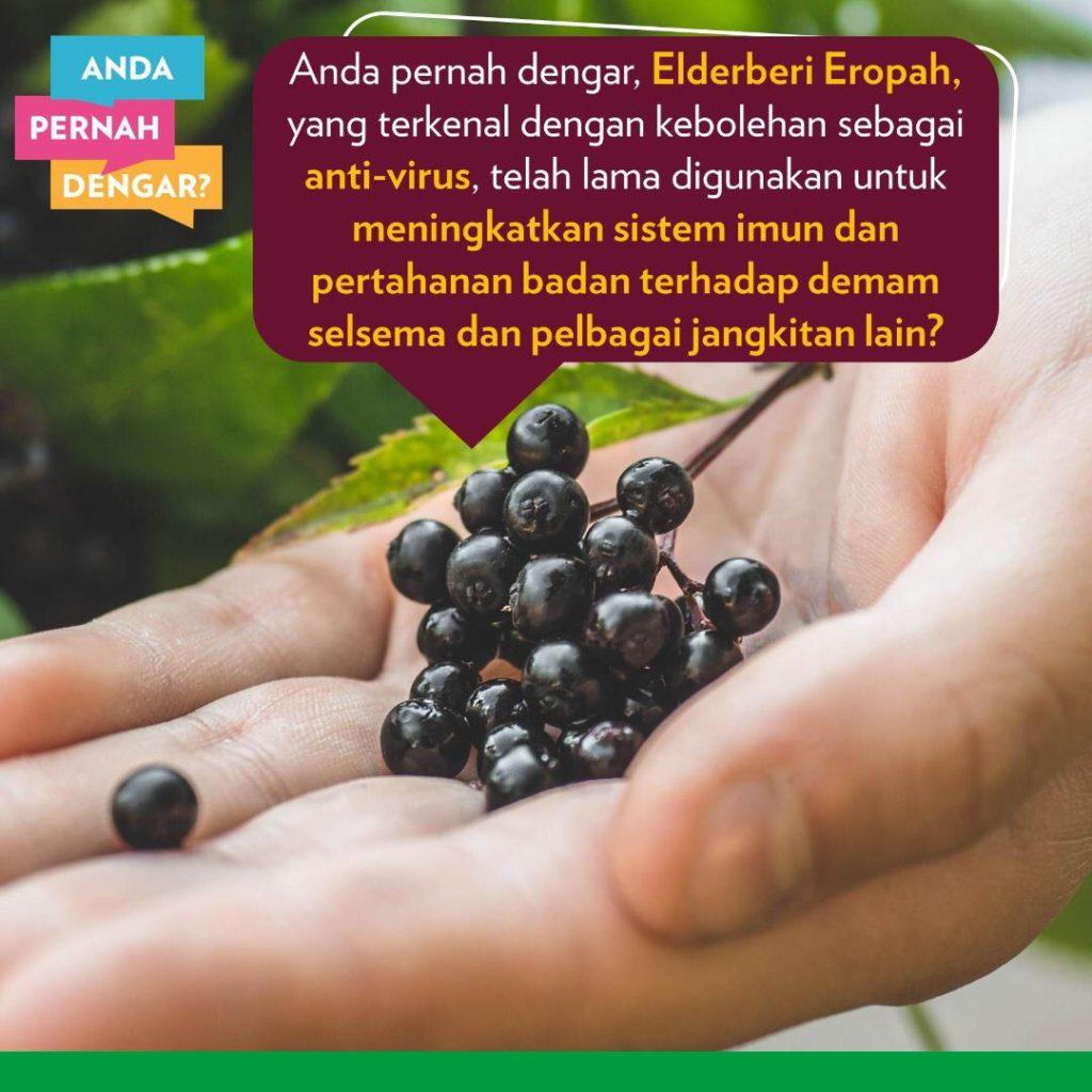 Elderberry sejenis beri turut tinggi dalam polifenol