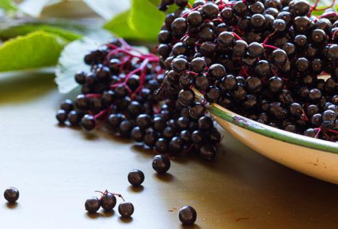 Elderberry vivix shaklee