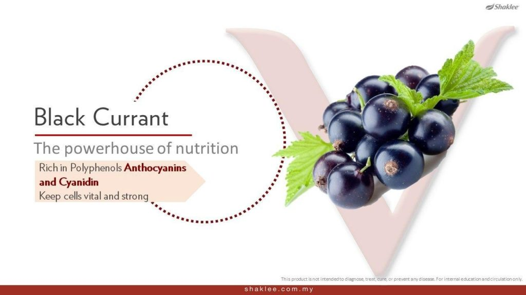 Blackcurrent mengandungi khasiat polifenol yang sangat baik untuk kesihatan