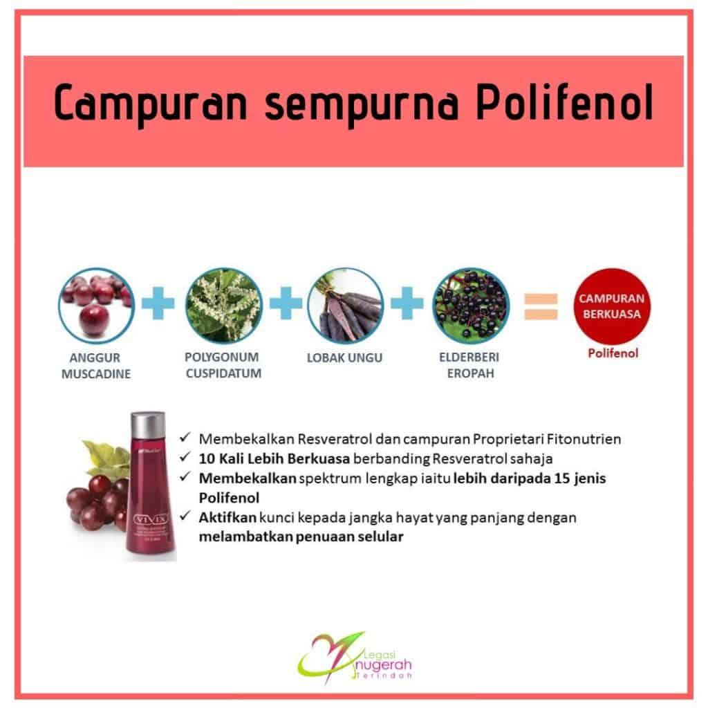 Campuran sempurna polifenol