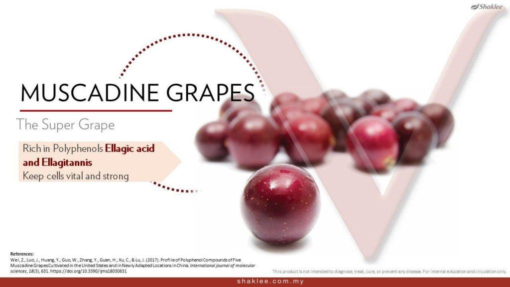 Anggur Muscadine ramuan utama ResV