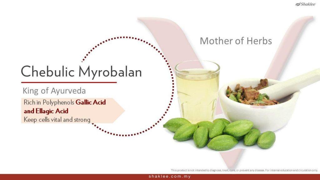 Chebulic Myirobalan sejenis perubatan Ayurveda