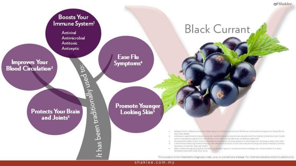 Kelebihan black currrent kepada kesihatan